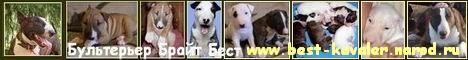 Сайт посвященный бультерьеру Брайту Бесту и его щенкам. На сайте много фотографий и полезной информации, гороскоп для Вашей собак��. Продажа щенков бультерьера. Кобель бультерьера предлагается для вязок